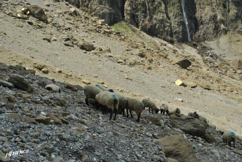 Pyrenees gavarnie 2015 07 131