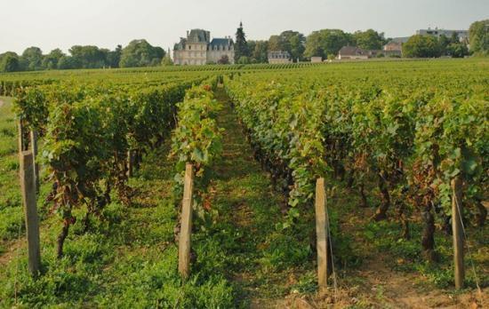 Route des vins de bourgogne 2019 13
