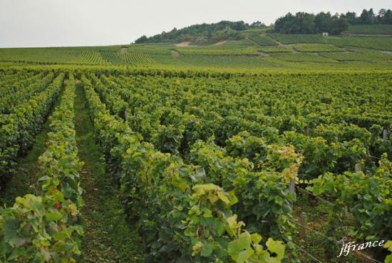 Route des vins de bourgogne 2019 4