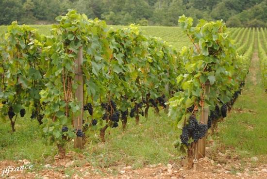 Route des vins de bourgogne 2019 6