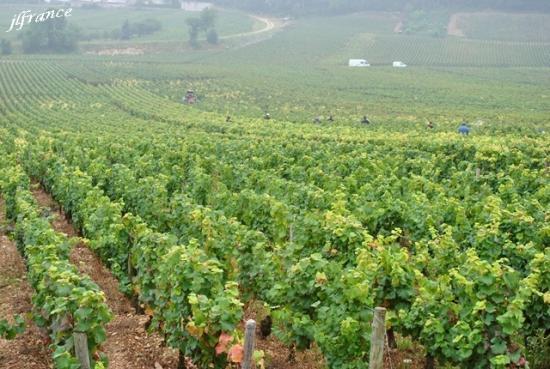 Route des vins de bourgogne 2019 7